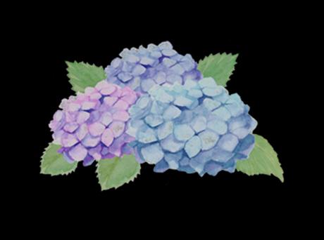 季節の花6月